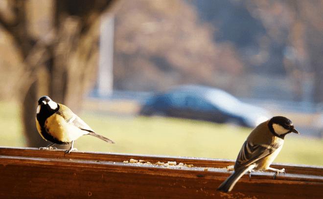 Птицы сидят на балконе