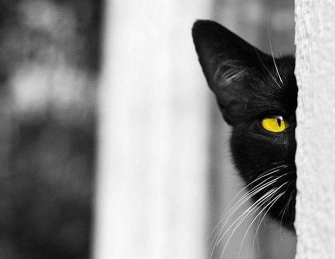 Черная кошка выглядывает из-за угла