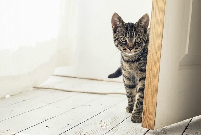 Новоселье если нет кота