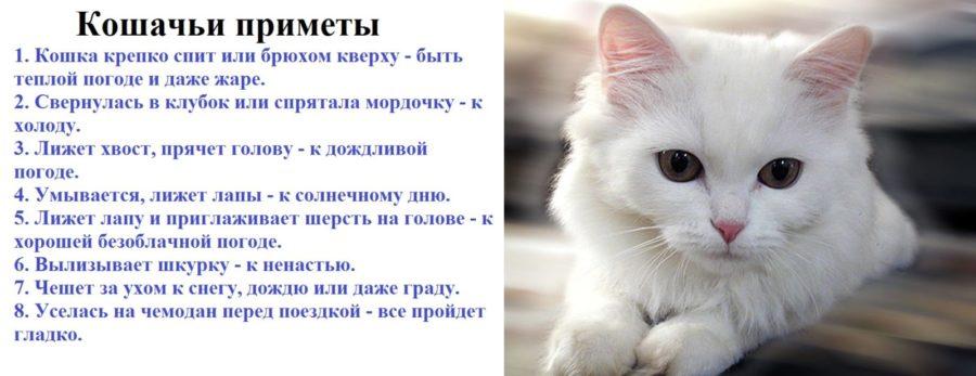 милые создания появление черной кошки в доме приметы похотливые девки безума