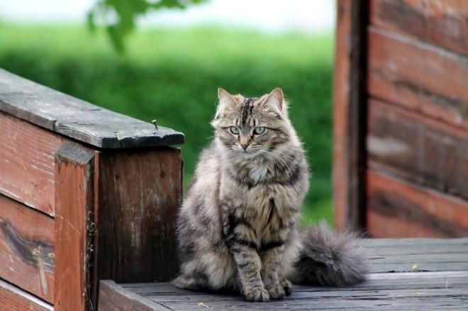 Что значит если прибиваются коты к дому