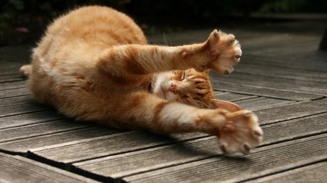 Рыжая кошка потягивается