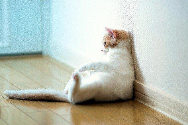 Кошка нашла удобное место для домового