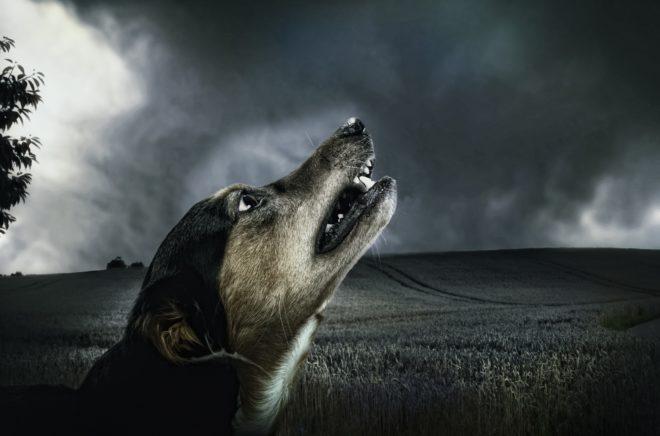 Воющая собака