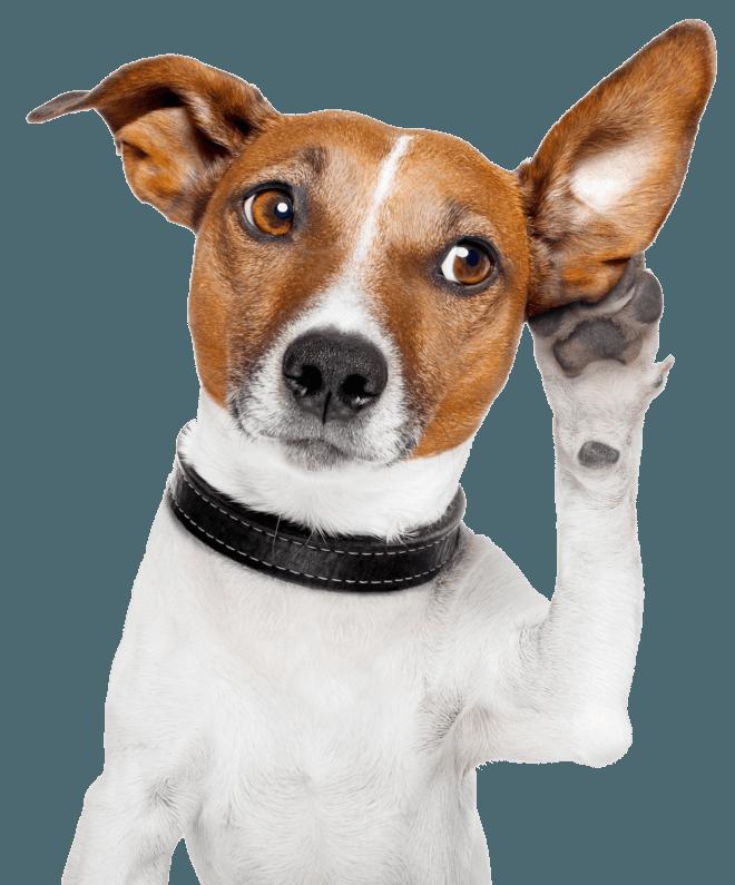 Собака и ухо
