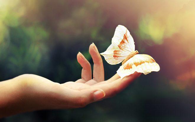 рука и бабочка