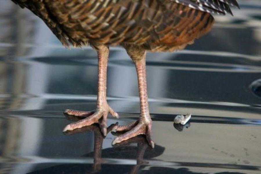 Птица накакала на голову, на одежду: примета и ее толкование.