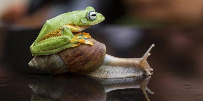 улитка и лягушка