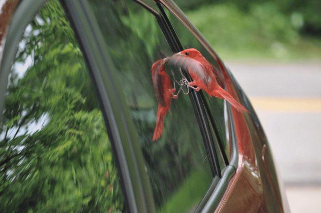 птица у авто