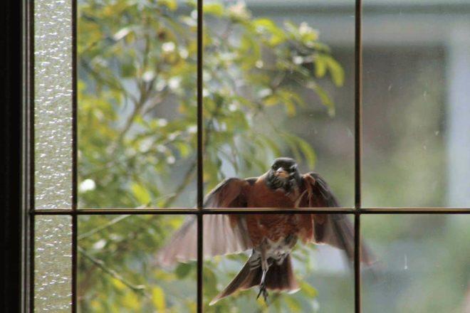 птица у окна
