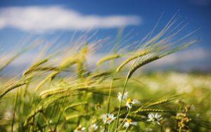 в солнечную погоду дует ветер и склоняет травы