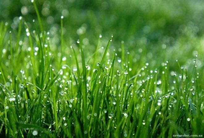 утренняя роса на траве